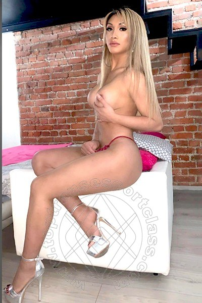 Angel Bunny  MILANO 3203851638